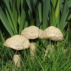 Mushroom - Button